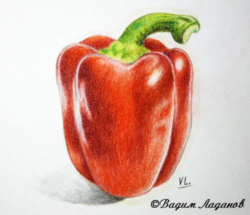 Красный перец, цветной карандаш, пинен