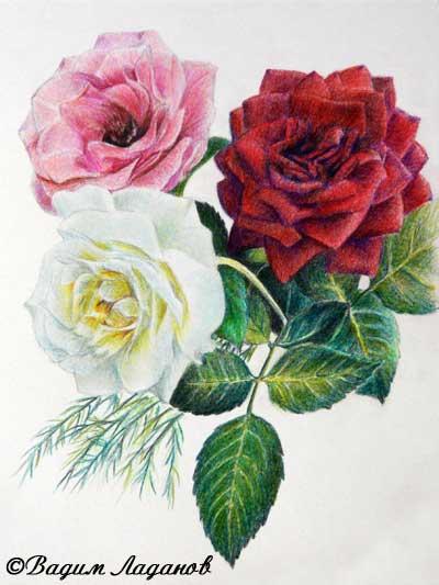 Яндекс мастер класс рисования роз инструкция #6