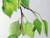 Ветви берёзы, сухая пастель
