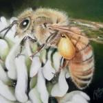 Пчела пастельными карандашами.
