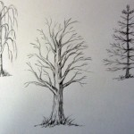 Как рисовать деревья простым карандашом