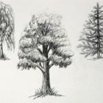 Как нарисовать листву деревьев