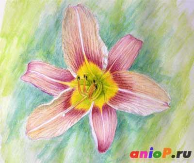 Как нарисовать цветок лилии акварельными карандашами