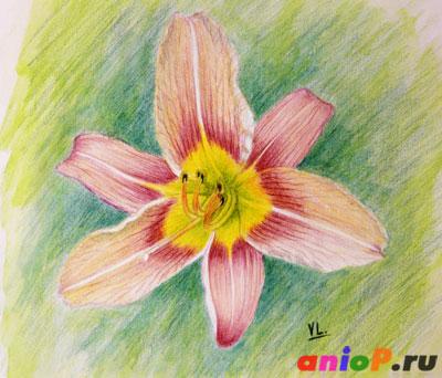 Рисуем дикую лилию акварельными карандашами