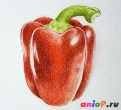 Рисуем красный перец цветными карандашами