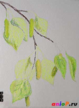 как нарисовать ветви березы пастелью