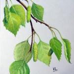 Рисуем ветви берёзы сухой пастелью