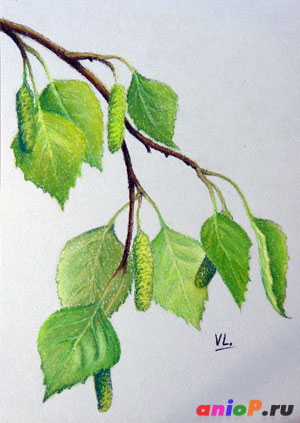 как нарисовать ветви березы сухой пастелью