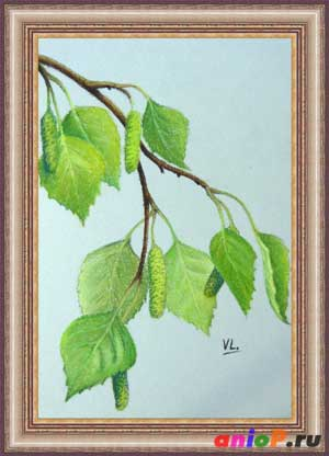 ветви березы пастелью