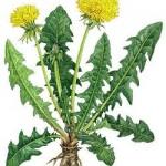 Поговорим о гербарии