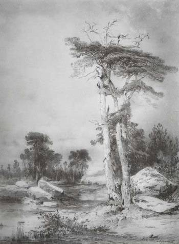 А.К. Саврасов. Старые сосны. 1854 г.
