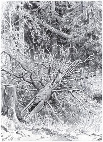 И.И. Шишкин. В лесу. Упавшее дерево. 1878 г.