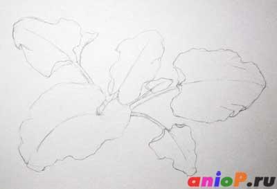 Рисуем лопухи простым карандашом
