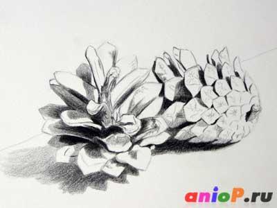сосновые шишки цветными карандашами