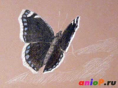 Эскиз бабочки Траурницы угольным карандашом