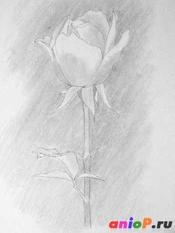Рисуем розу простым карандашом
