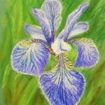 Рисуем эскиз цветка Ириса пастелью