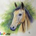 Портрет лошади акварельными карандашами