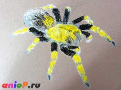 паук пастелью