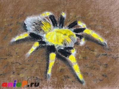 как рисовать паука