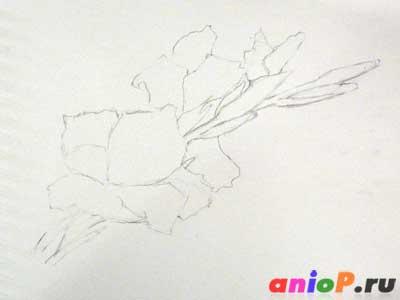 как рисовать гладиолус
