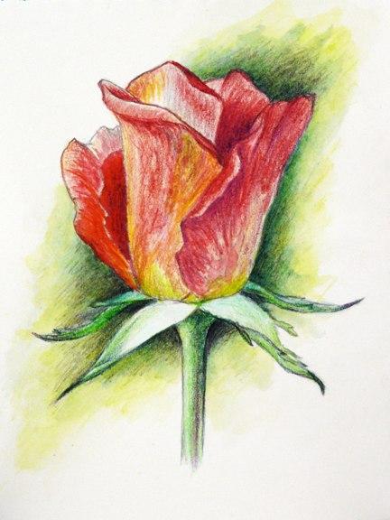 rosa-resultat