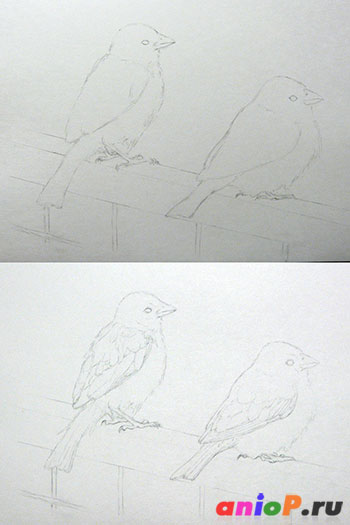 Рисунок воробьев простым карандашом
