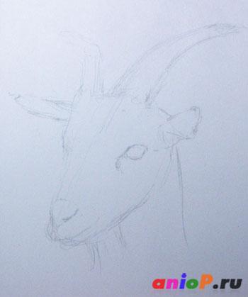 Рисунок козы цветными карандашами