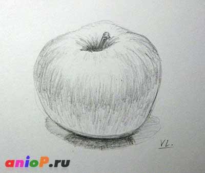 Яблоко простым карандашом