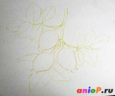 Рисунок шиповника акварельными карандашами