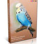 Мастер-Класс по рисованию волнистых попугаев сухой пастелью