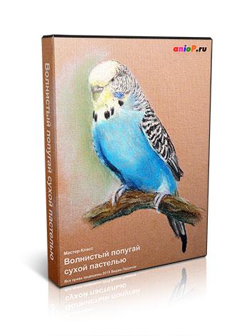 Попугай сухой пастелью