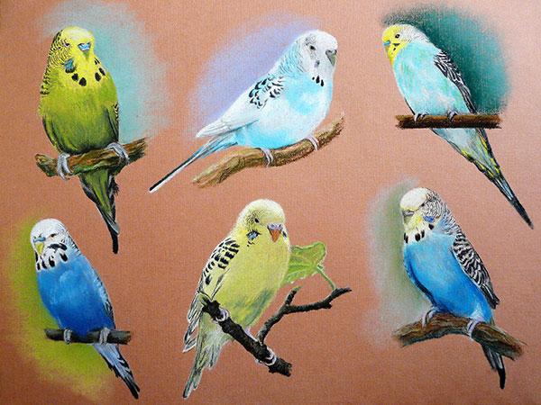 Попугаи сухой пастелью