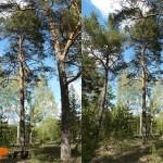 7 плюсов и 7 минусов при использовании фотографий в рисунке