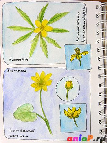Желтые весенние цветы