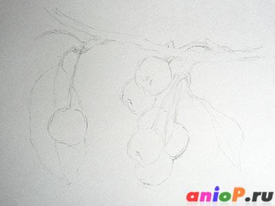 Рисунок ранеток карандашом