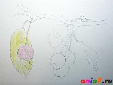 Рисунок ранеток карандашами