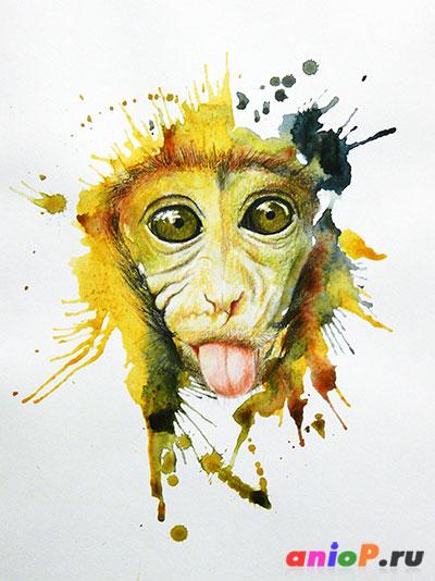Портрет обезьяны акварелью и карандашами