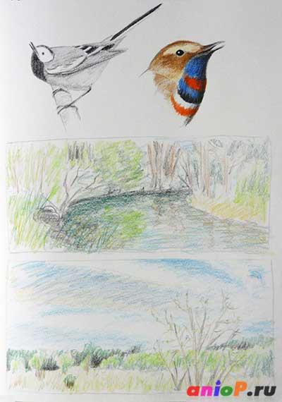 Птицы и пейзажи - наброски карандашом