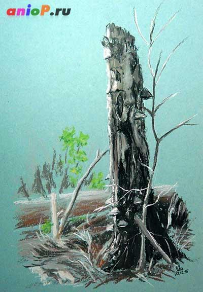 Старое дерево пастелью