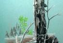 Экскурсия в сосновый лес