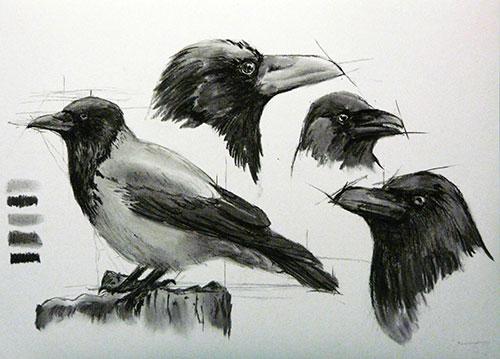 Серая ворона, уголь