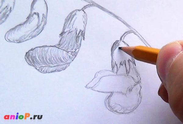 Весенние зарисовки. Выпуск 3 — Чина весенняя