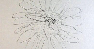 Как нарисовать жука усача простым карандашом
