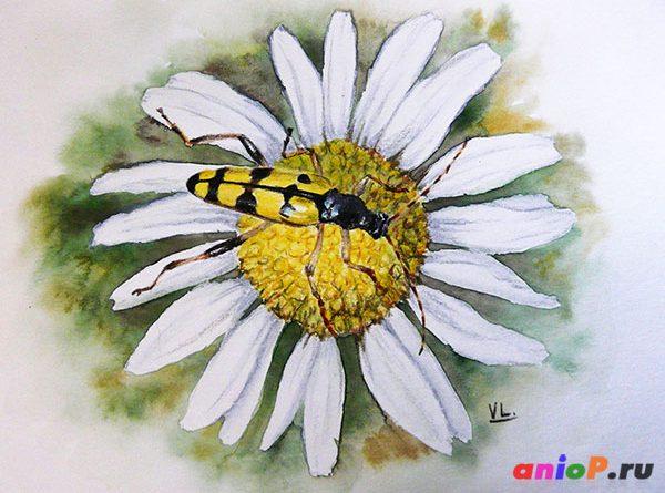 Как нарисовать жука акварельными каранадашами