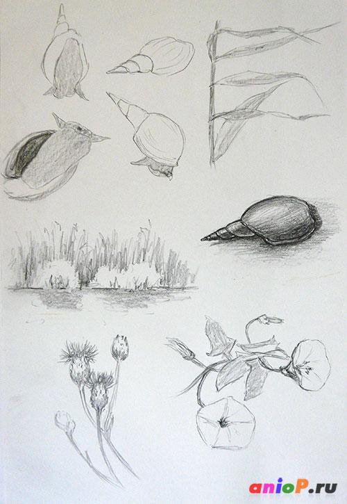 Зарисовки на Яицких озерах