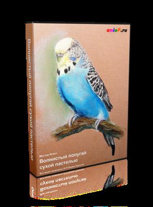 попугаи пастелью
