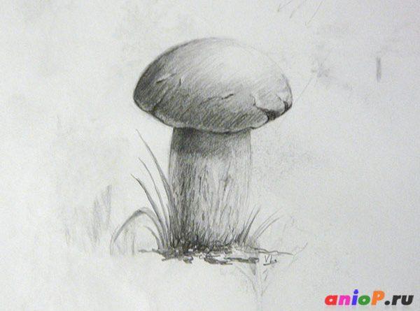 рисунок гриба карандашом