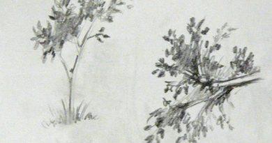 Основы рисунка. Часть 16 — как быстро и просто рисовать листья деревьев