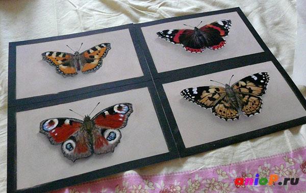 рисунки бабочек пастелью